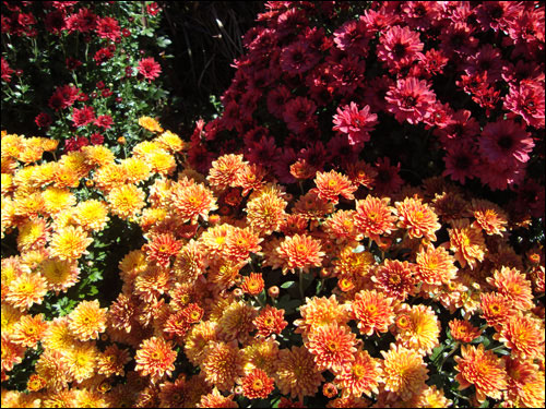 More fall flowers
