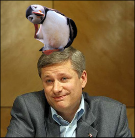 Stephen Harper & Puffin