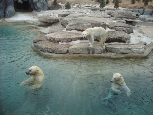 polar bears, Toronto Zoo, March 29