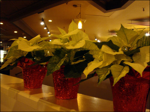 white poinsettias in the restaurant