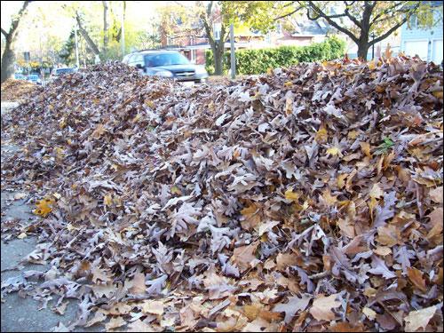 GTA leaves, November 8, 2009