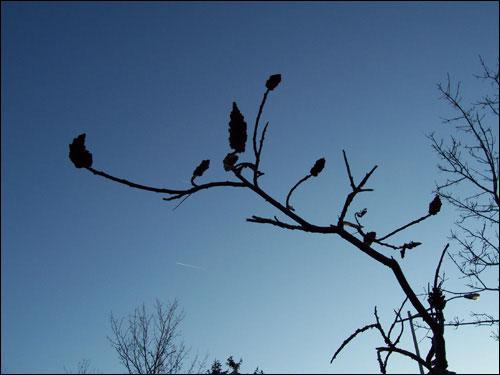 Gorgeous blue fall sky, November 8, 2009