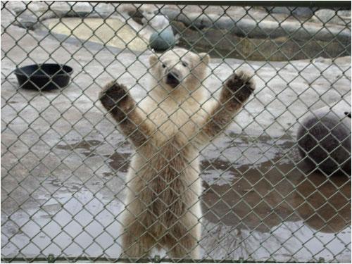 Humphrey at four months, Toronto Zoo